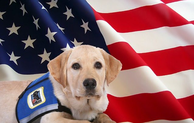 Pets for Veterans Day
